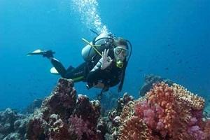 Tour lặn ngắm san hô Sơn Trà